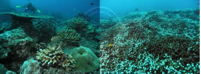 แนวปะการังตามเวิ้งอ่าวทางฝั่งตะวันตกของเกาะต่างๆ ทางฝั่งทะเลอันดามัน