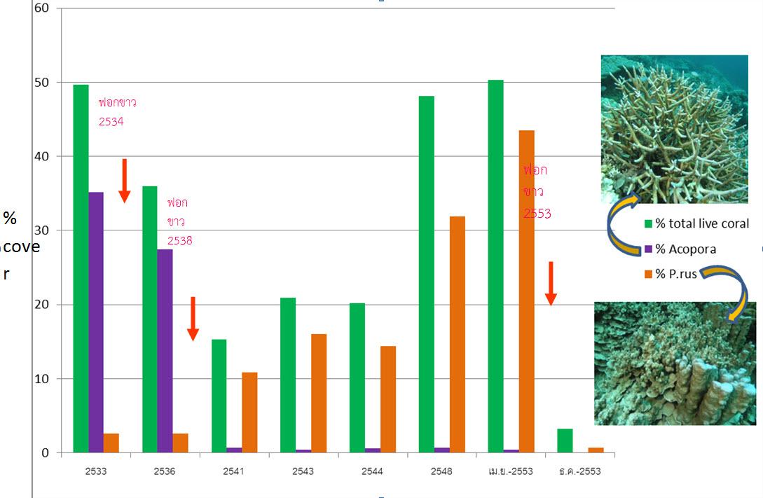 กราฟแสดงเปอร์เซ็นต์ปกคลุมพื้นที่ของปะการังที่มีชีวิต